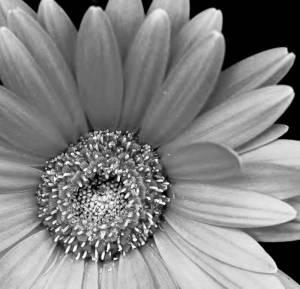 Black-white-flowers-better