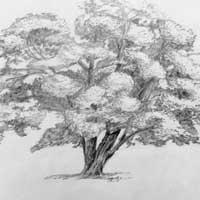 tree_sm